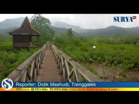 Eksotisnya Hutan Bakau Pantai Cengkrong Trenggalek Youtube Mangrove Pancer Kab
