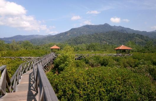 Harga Tiket Masuk Hutan Mangrove Pancer Cengkrong Trenggalek Wisata Kab