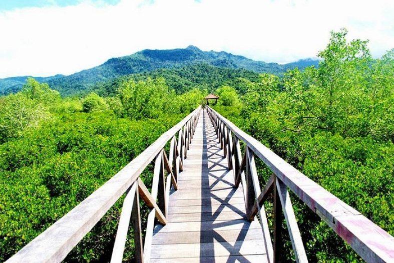 Hutan Bakau Pancer Cengkrong Visit Trenggalek Mangrove Kab