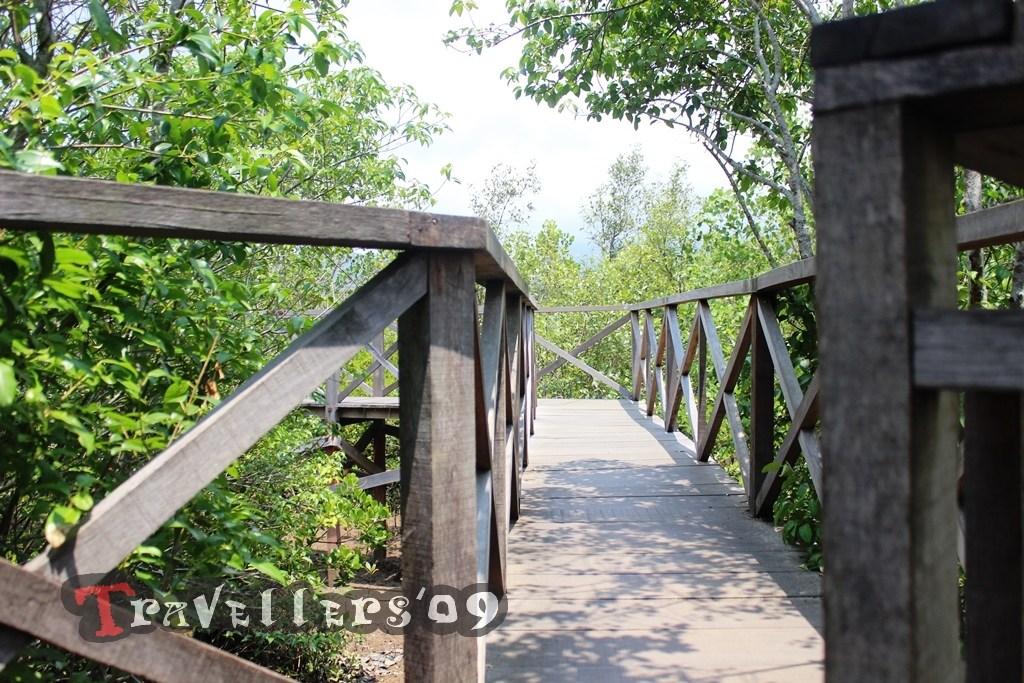 Hutan Mangrove Cengkrong Eksotisme Teluk Prigi Trenggalek Jembatan Travellers Ecotourism