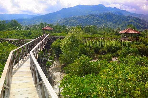 Hutan Mangrove Darwis Muhammad Kawasan Wisata Bakau Letaknya Tidak Jauh