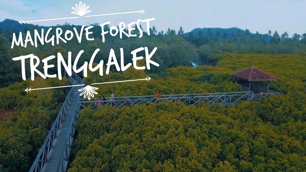 Hutan Mangrove Ekowisata Kece Trenggalek Youtube Pancer Cengkrong Kab