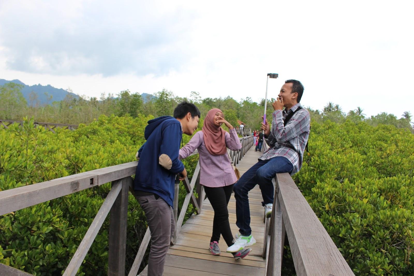 Hutan Mangrove Jembatan Galau Adventure Power Pancer Cengkrong Kab Trenggalek