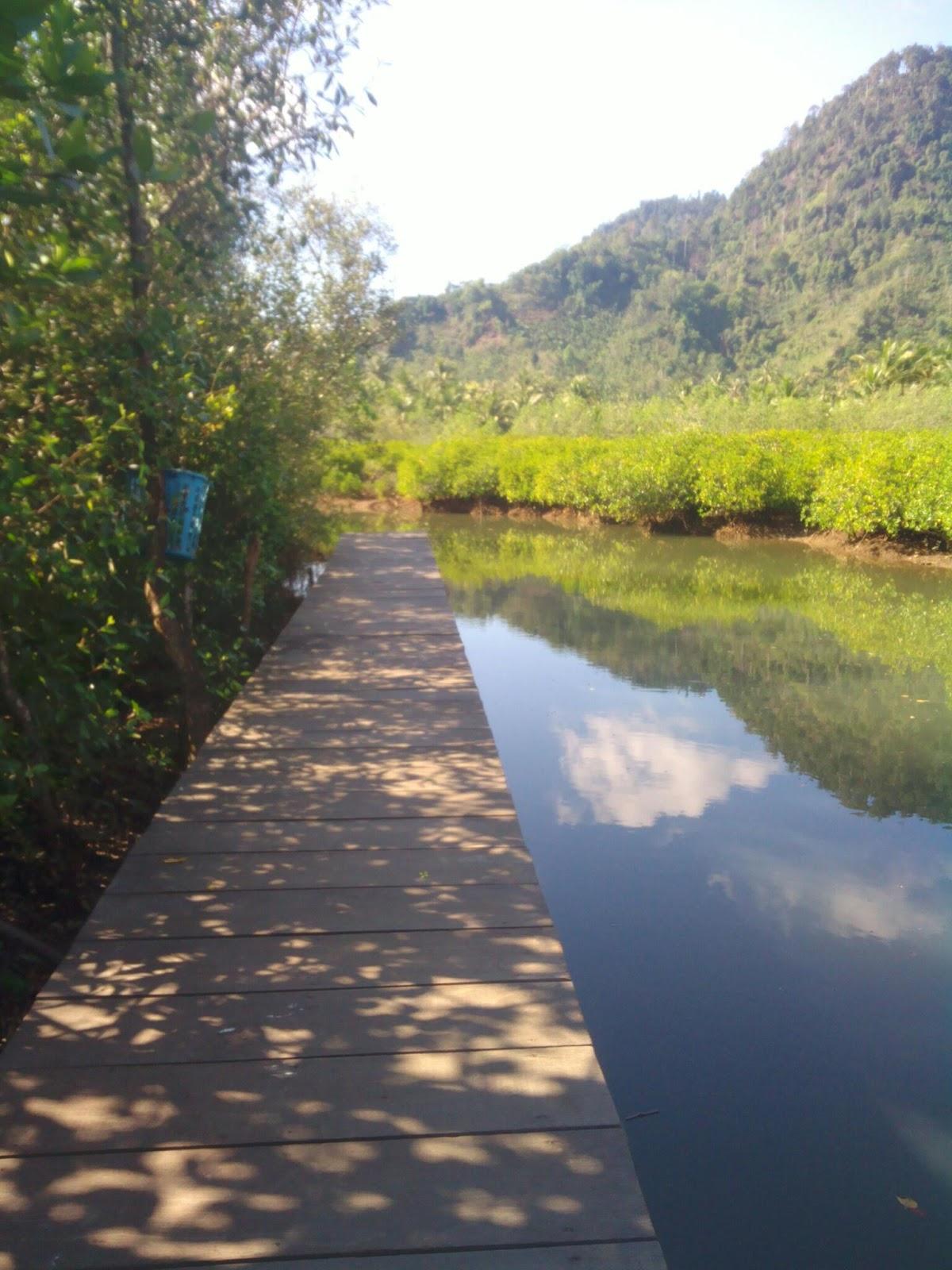 Hutan Mangrove Pancer Cengkrong 2015 Melakukan Prewedding Rata Luar Kota