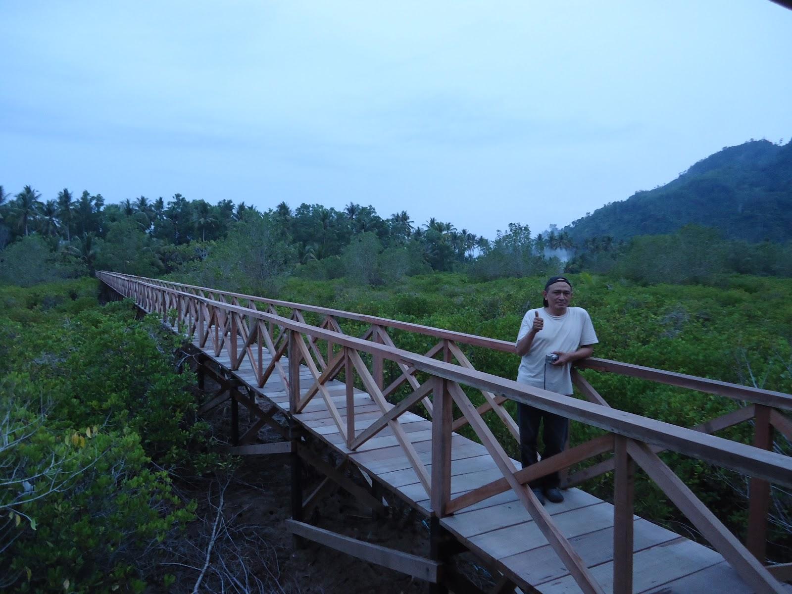 Hutan Mangrove Pancer Cengkrong Cantik Jembatan Atas Pengunjung Kab Trenggalek