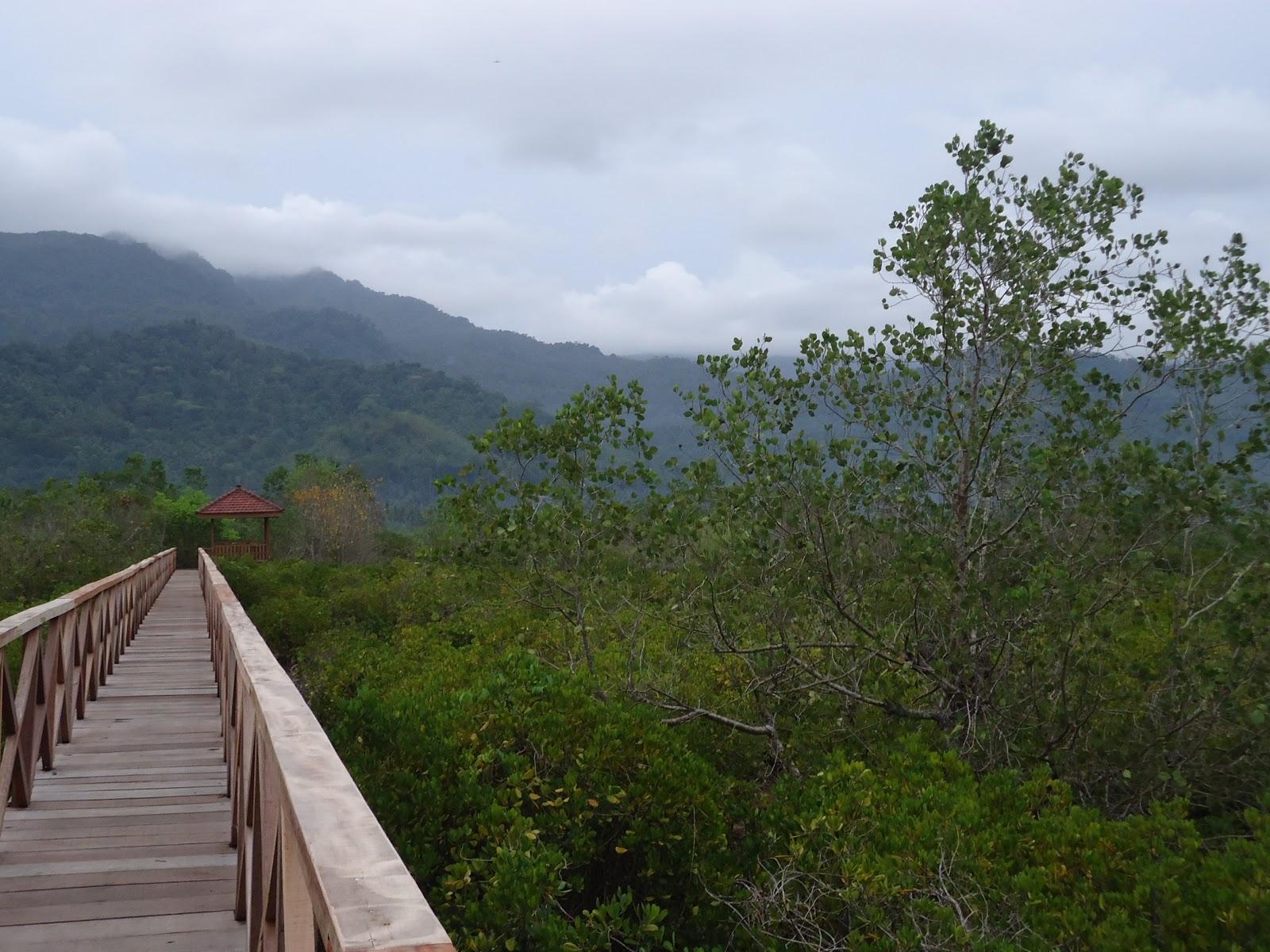 Hutan Mangrove Pancer Cengkrong Eksotik Trenggalek Jawa Timur Kab
