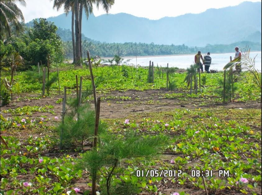 Hutan Mangrove Pancer Cengkrong Gallery Sungai Kegiatan Konservasi Kab Trenggalek
