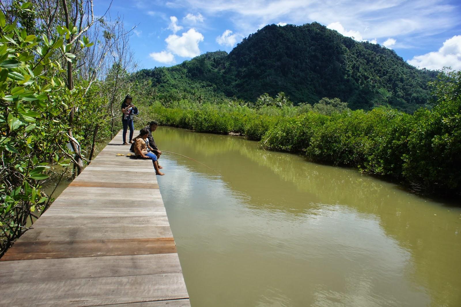 Hutan Mangrove Pancer Cengkrong Permata Semenjak Pemerintah Kabupaten Trenggalek Melalui