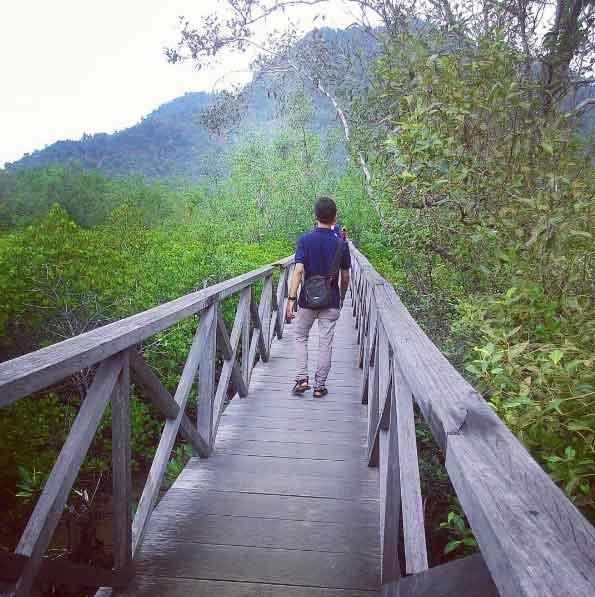 Hutan Mangrove Pancer Cengkrong Tempat Wisata Keluarga Trenggalek Kab