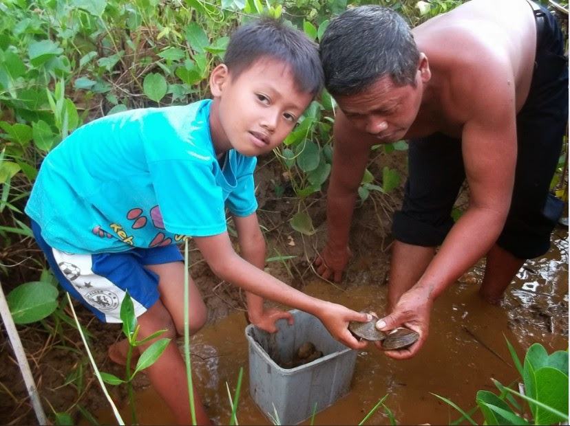 Hutan Mangrove Pancer Cengkrong Thothok Kerang Bakau Kawasan Desa Karanggandu