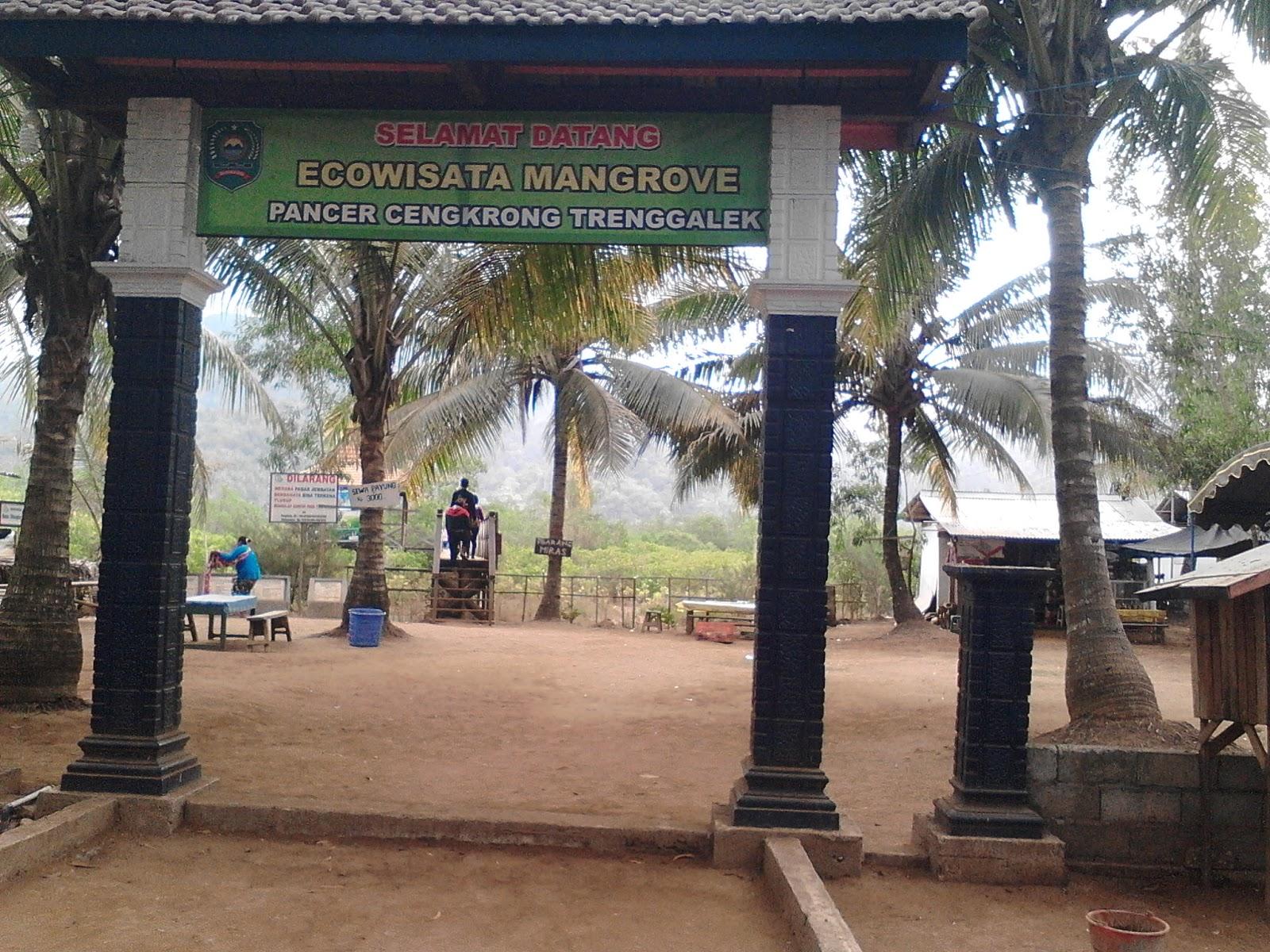Hutan Mangrove Pancer Cengkrong Trenggalek Rayi Agustina Kab