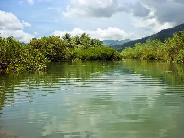 Hutan Mangrove Pancer Cengkrong Watulimo Trenggalek Jawa Timur Kab
