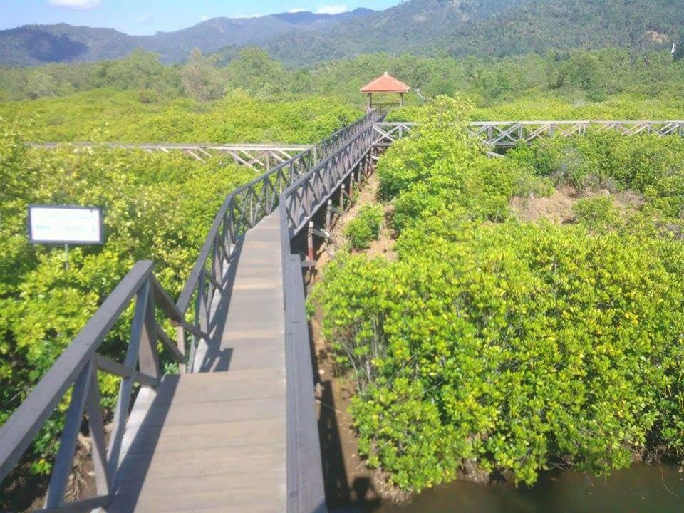 Hutan Mangrove Trenggalek Pesona Indah Pancer Cengkrong Kab
