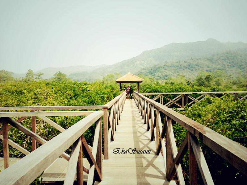 Jembatan Galau Hutan Mangrove Pancer Cengkrong Trenggalalek Kalian Mengikuti Arah