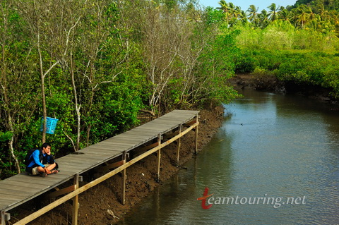 Jembatan Galau Hutan Mangrove Pancer Cengkrong Trenggalek Annosmile Kab