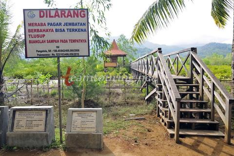 Jembatan Galau Hutan Mangrove Pancer Cengkrong Trenggalek Jalan Masuk Kab