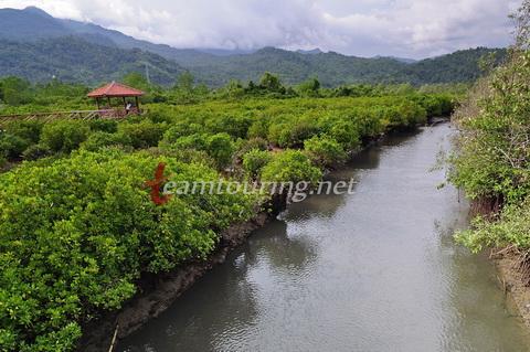 Jembatan Galau Hutan Mangrove Pancer Cengkrong Trenggalek Muara Sungai Kab