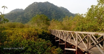 Jembatan Galau Hutan Mangrove Pancer Cengkrong Wongcrewchild Lokasi Pantai Kab