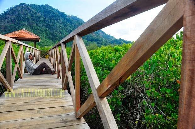 Jembatan Galau Kawasan Hutan Mangrove Pancer Cengkrong Bukan Tempat Khusus