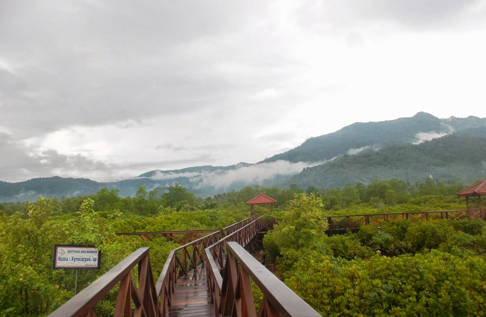 Jpg Taman Wisata Mangrove Hutan Pancer Cengkrong Kab Trenggalek