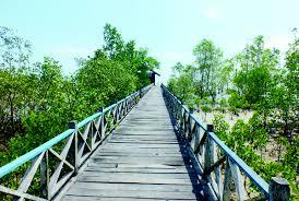 Keindahan Wisata Hutan Mangrove Pancer Cengkrong Trenggalek Tempat Kunjungi Pesona