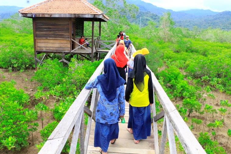 Konservasi Hutan Mangrove Pancer Cengkrong Ldii Kediri Raya Kab Trenggalek