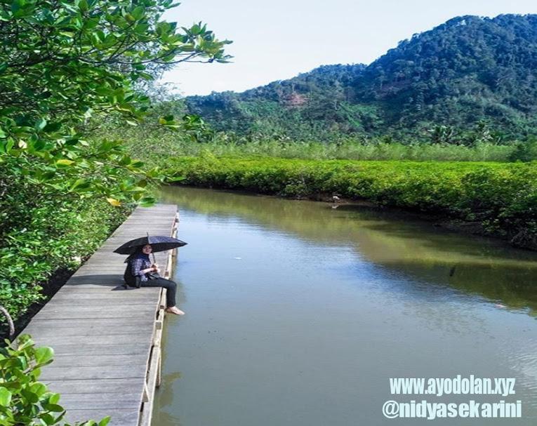 Mangrove Cengkrong Trenggalek Menikmati Kesejukan Alam Alami Hutan Pancer Kab