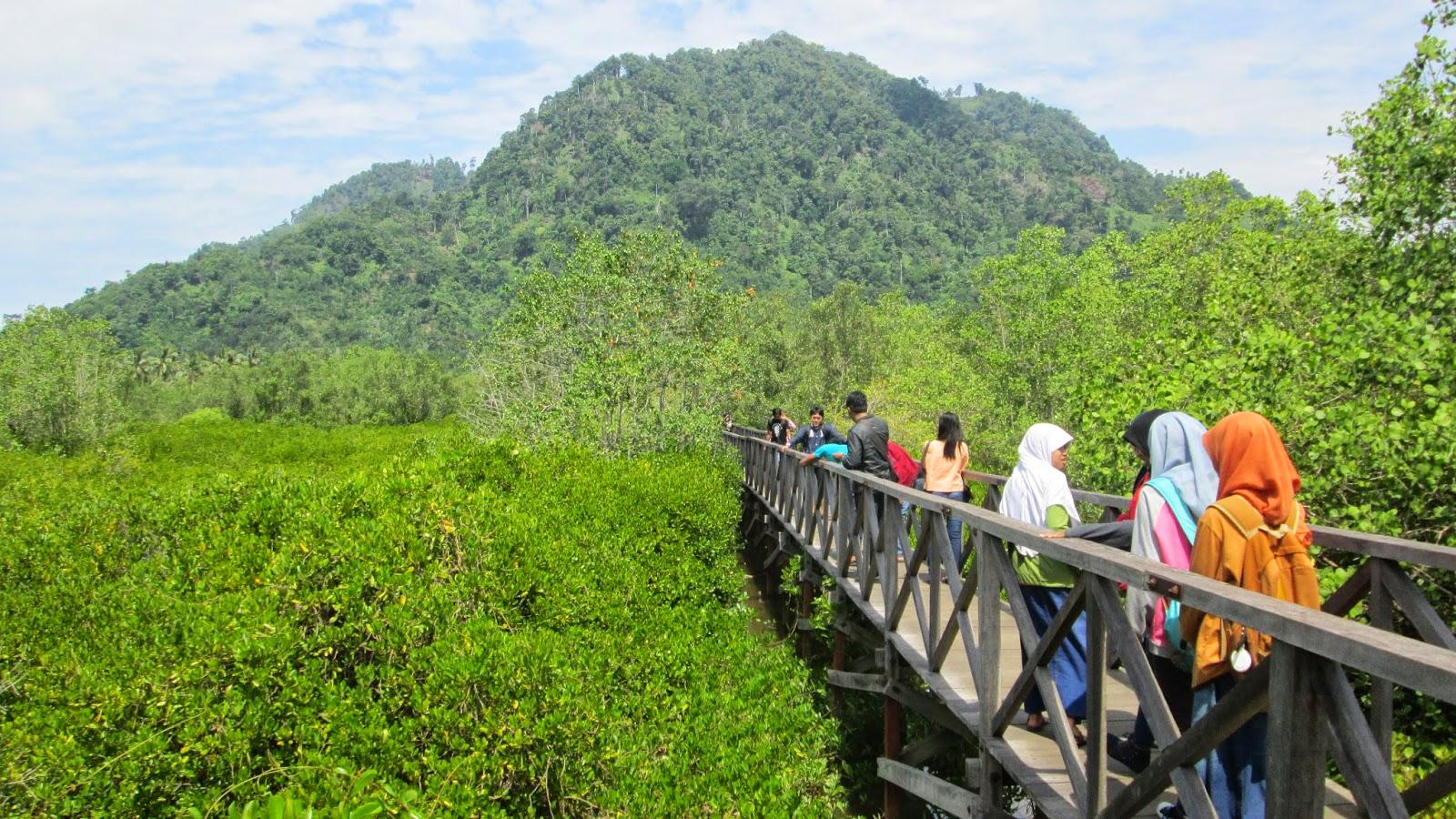 Pesona Alam Hutan Mangrove Pancer Cengkrong Sindopos Hutang Trenggalek Kab