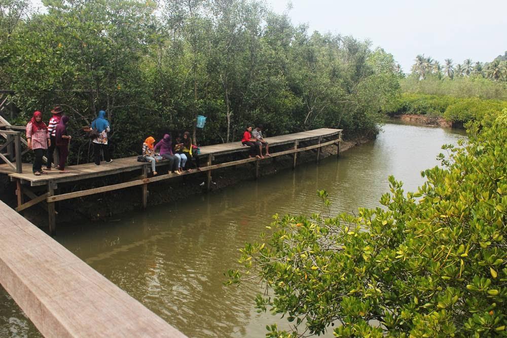 Pesona Alam Hutan Mangrove Pancer Cengkrong Sindopos Trenggalek Kab