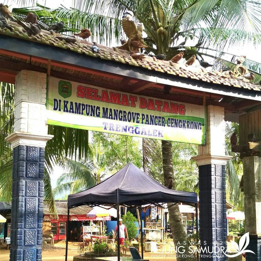 Pesona Hutan Mangrove Pancer Cengkrong Trenggalek Mlampah Dolan Ekowisata Desa