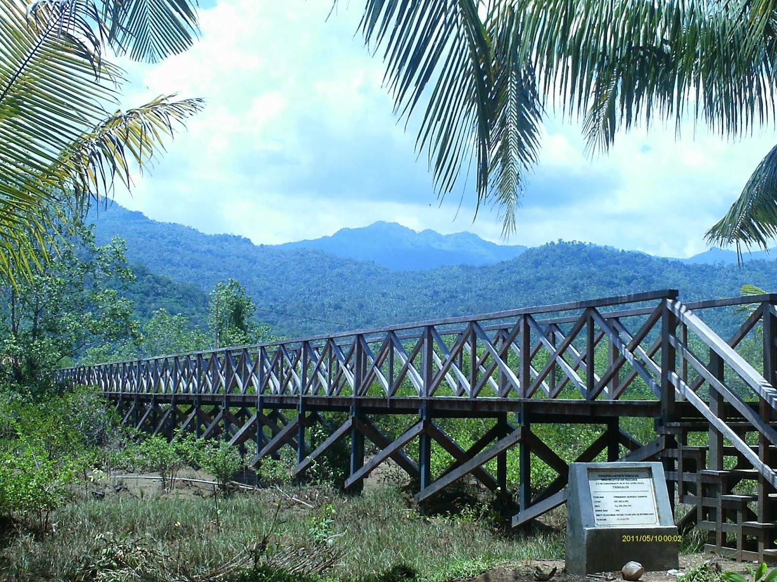 Selamatkan Bumi Kita Ekowisata Mangrove Pancer Cengkrong Jembatan Kayu Hutan
