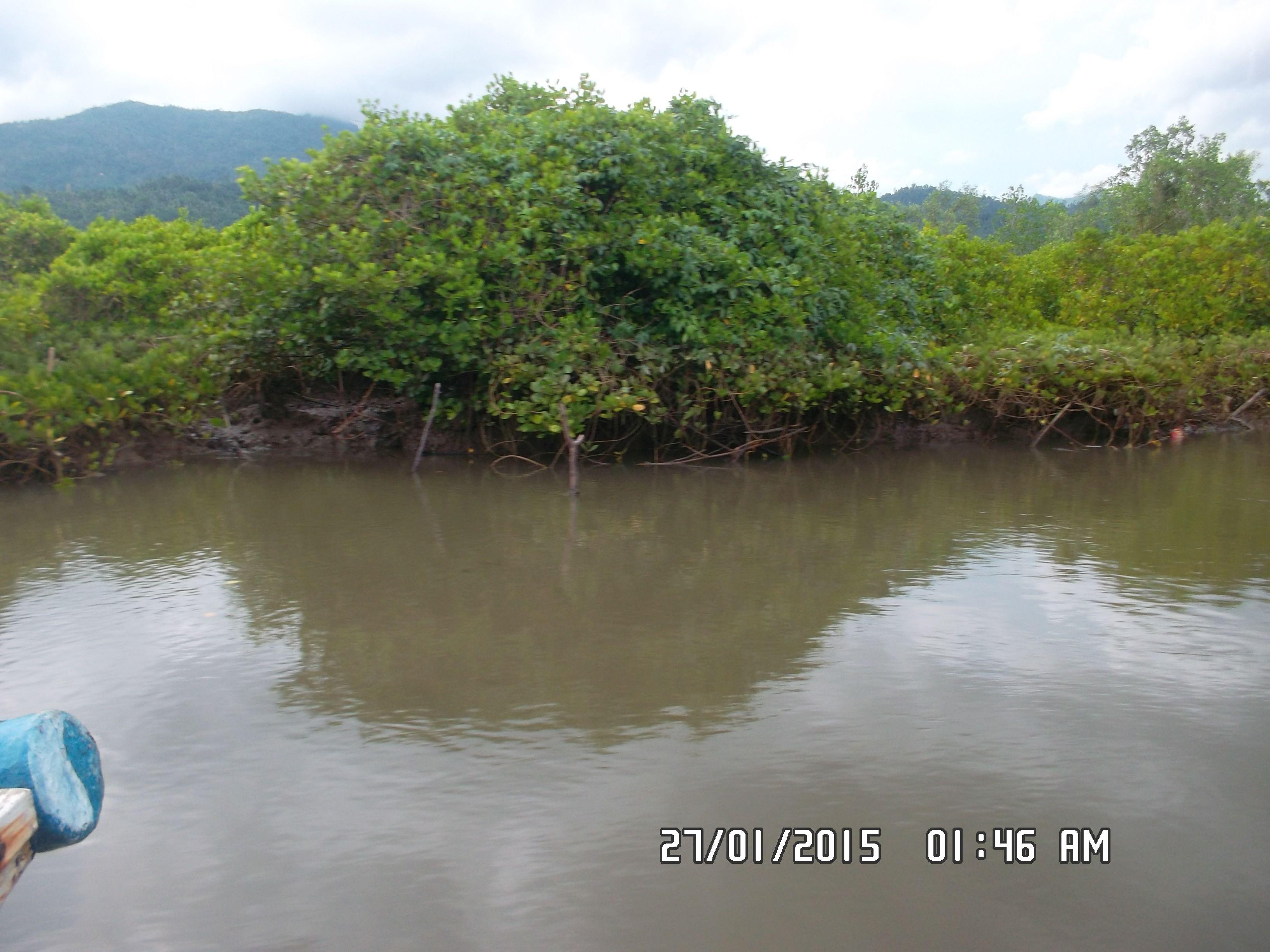 Taman Wisata Mangrove Cengkrong Trenggalek Jatim Indonesia Hutan Pancer Kab