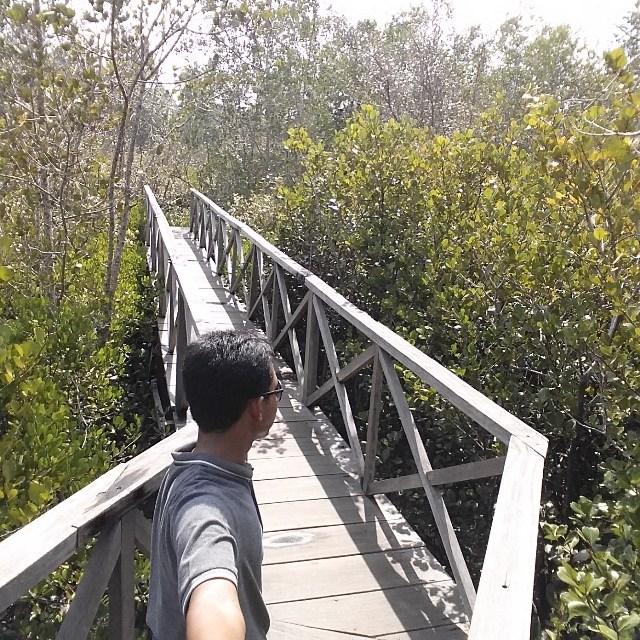 Trenggalek Punya Wisata Hutan Mangrove Keren Buruan Salah Satu Sudut