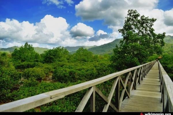 Wisata Hutan Mangrove Pesisir Trenggalek Diminati Wisatawan Antara Pancer Cengkrong