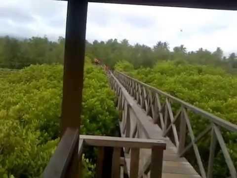 Wisata Jembatan Hutan Mangrove Cengkrong Trenggalek Youtube Pancer Kab