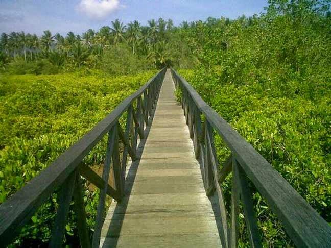 Info Wisata Pantai Kabupaten Trenggalek Damas Kita Bisa Menikmati Hijaunya