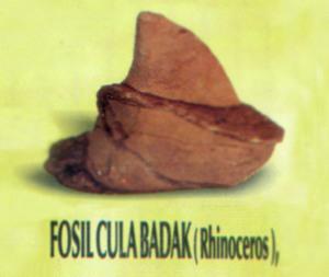 Museum Kambang Putih Kabupaten Tuban Wisata Jawatimuran Pusaka Fosil Kab