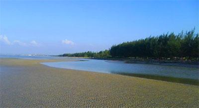 Mangrove Center Tuban Taman Kambang Putih Kab