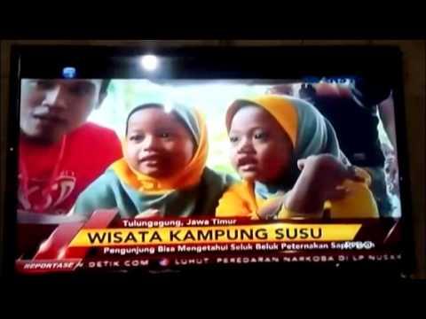 Kampung Susu Dinasty Transtv Youtube Kab Tulungagung