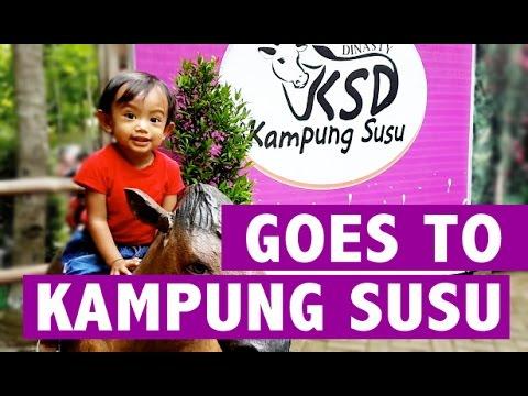 Kampung Susu Dinasty Tulungagung Wisata Edukasi Lintang Akayla Kab