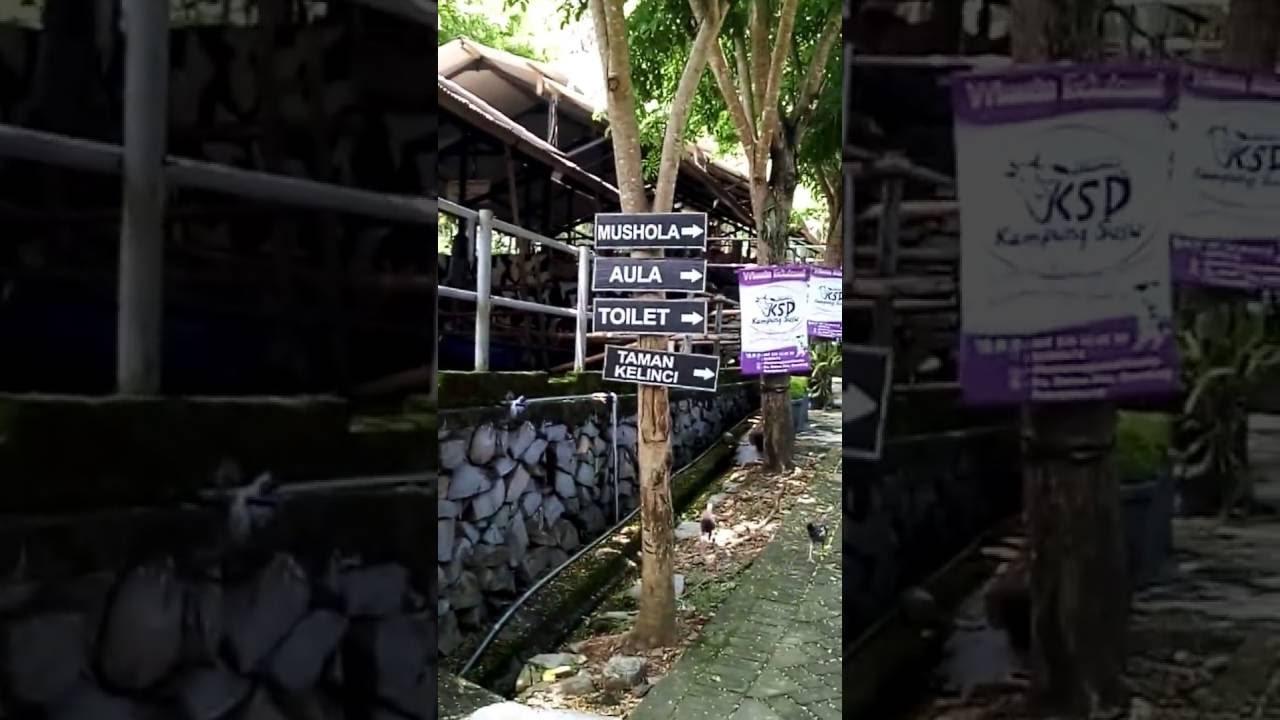 Kampung Susu Dinasty Tulungagung Wisata Edukasi Terbaru Youtube Kab