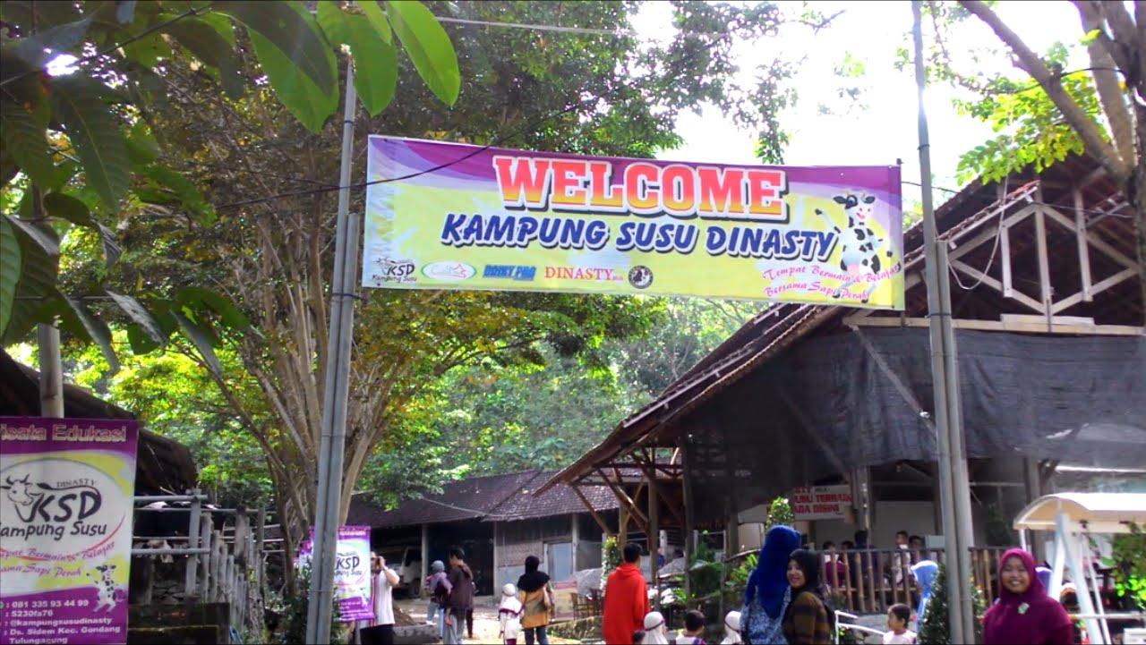 Kampung Susu Dinasty Wisata Edukasi Tulungagung Harianpost Kab