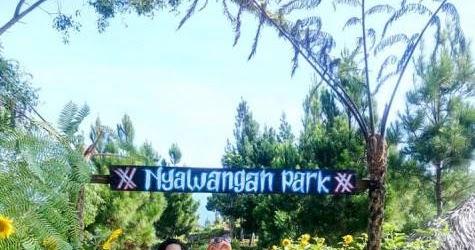 Nyawangan Park Sendang Tulungagung Spot Foto Hutan Pinus Hits Tempat