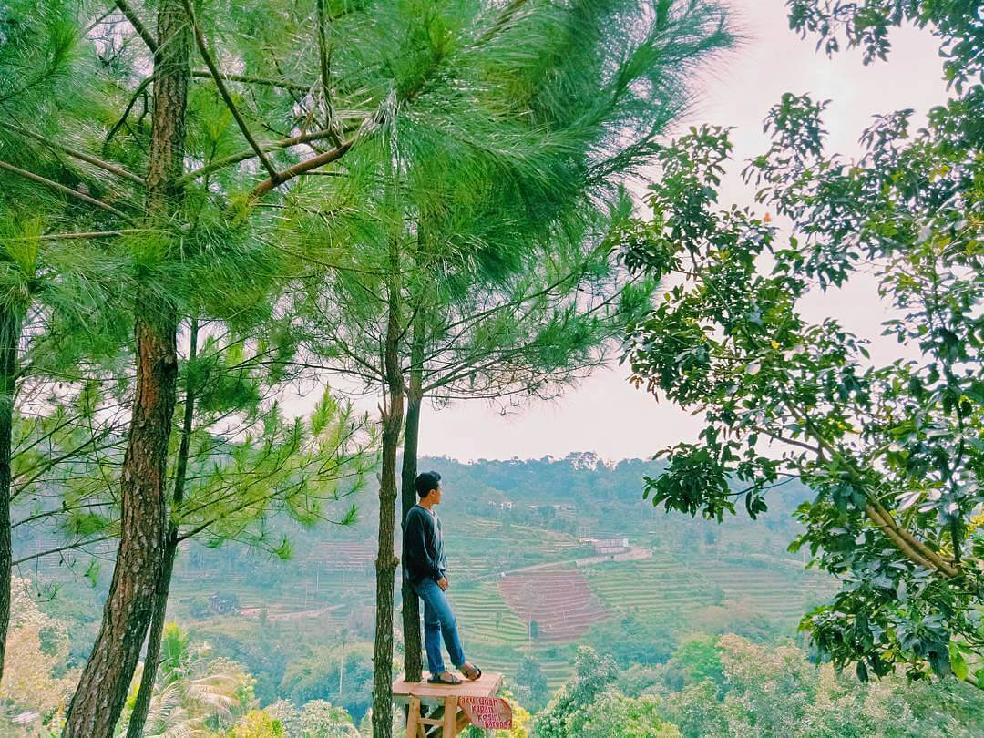 Nyawangan Park Sendang Tulungagung Wisata Selfie Hutan Pinus Taman Kab
