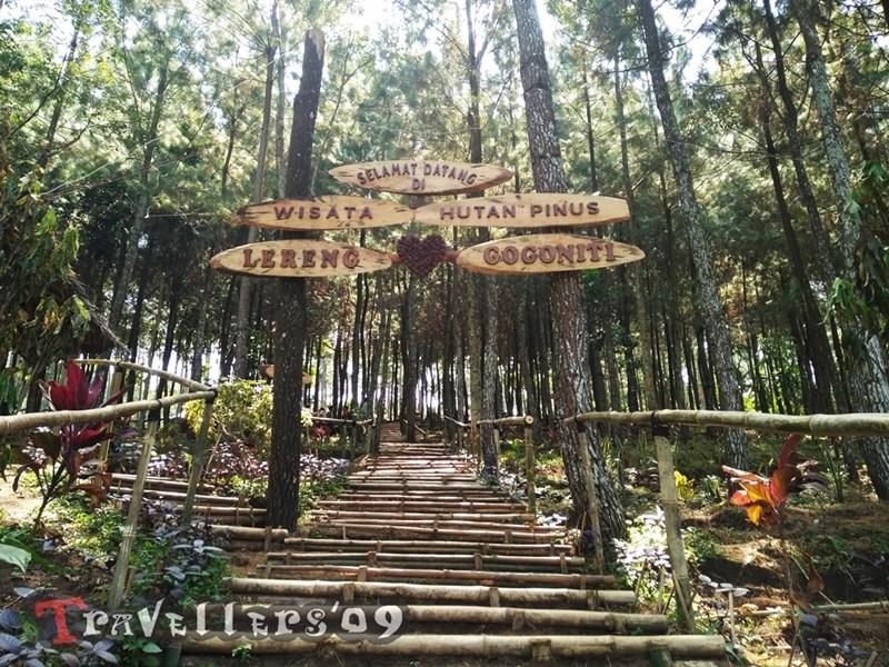 Wisata Hutan Pinus Lereng Gogoniti Blitar Travellers Lazimnya Disebut Secara
