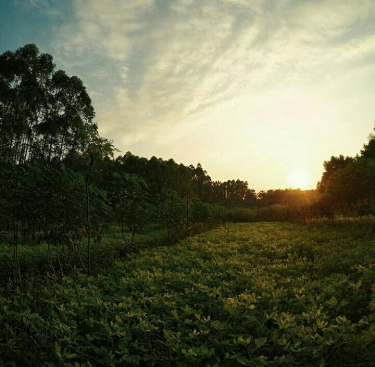 Blog Tempat Wisata Wonogiri Explore Objek Alam Alas Kethu Berlokasi