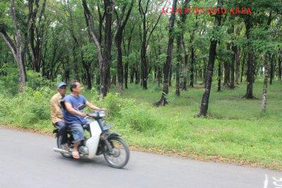 Randusari Ngadirojo Obyek Wisata Wonogiri Jawa Tengah Alas Kethu Cocok