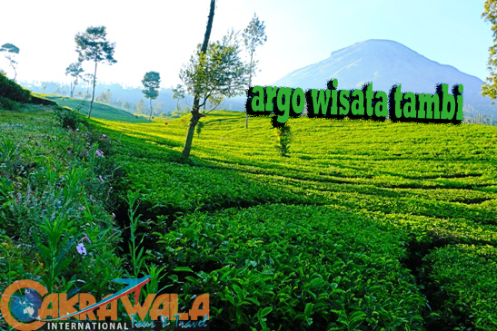 Agrowisata Tambi Wonosobo Cakrawala International Tour Travel Kab