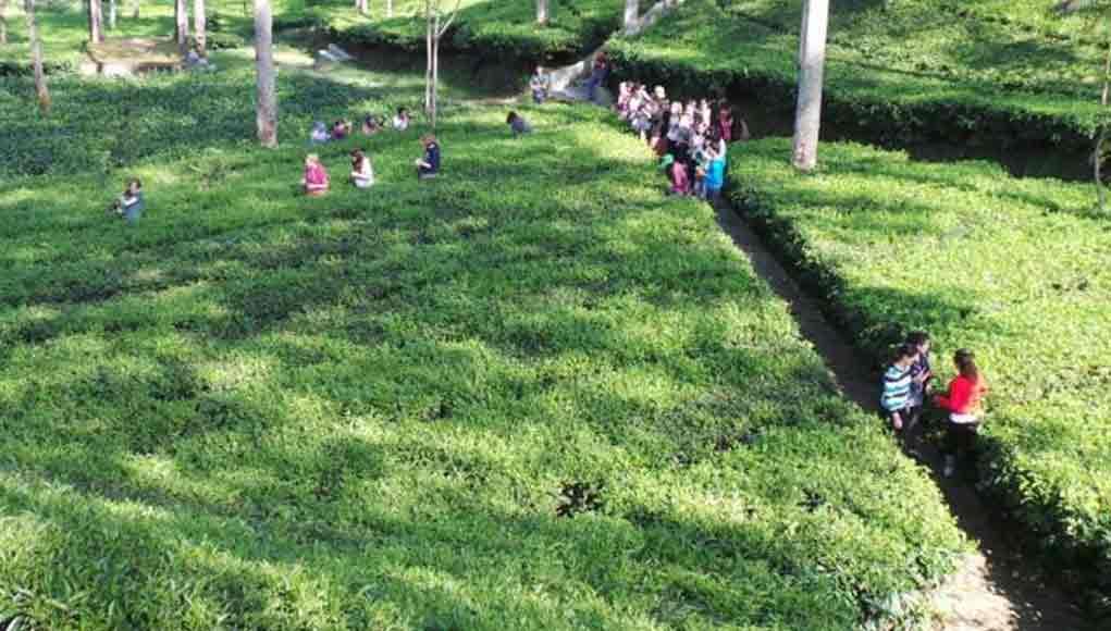 13 Tempat Wisata Wonosobo Dieng Murahmeriah Objek Jawa Tengah Alun