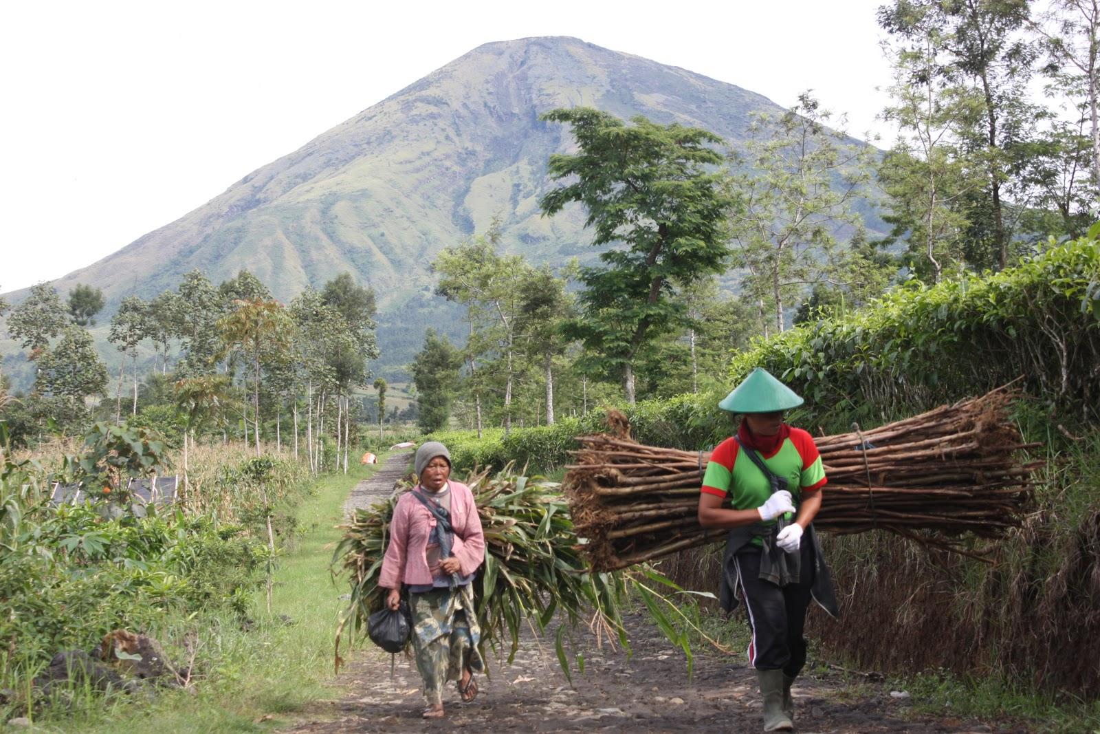 Blognya Kertek Wonosobo Desember 2011 Naiknya Status Gunung Sindoro Normal